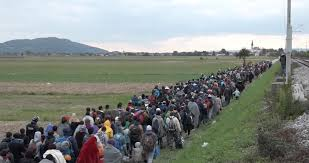 migranti alfa