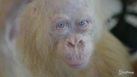 scimmia tre